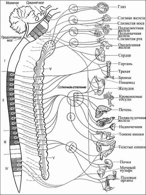 Схема строения и связей