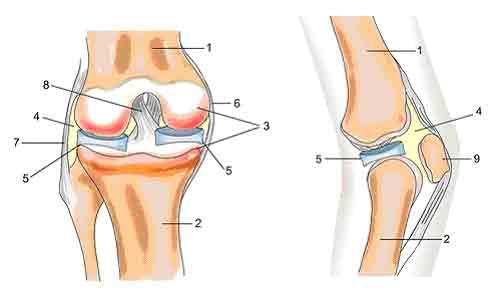 Артрозу коленного сустава